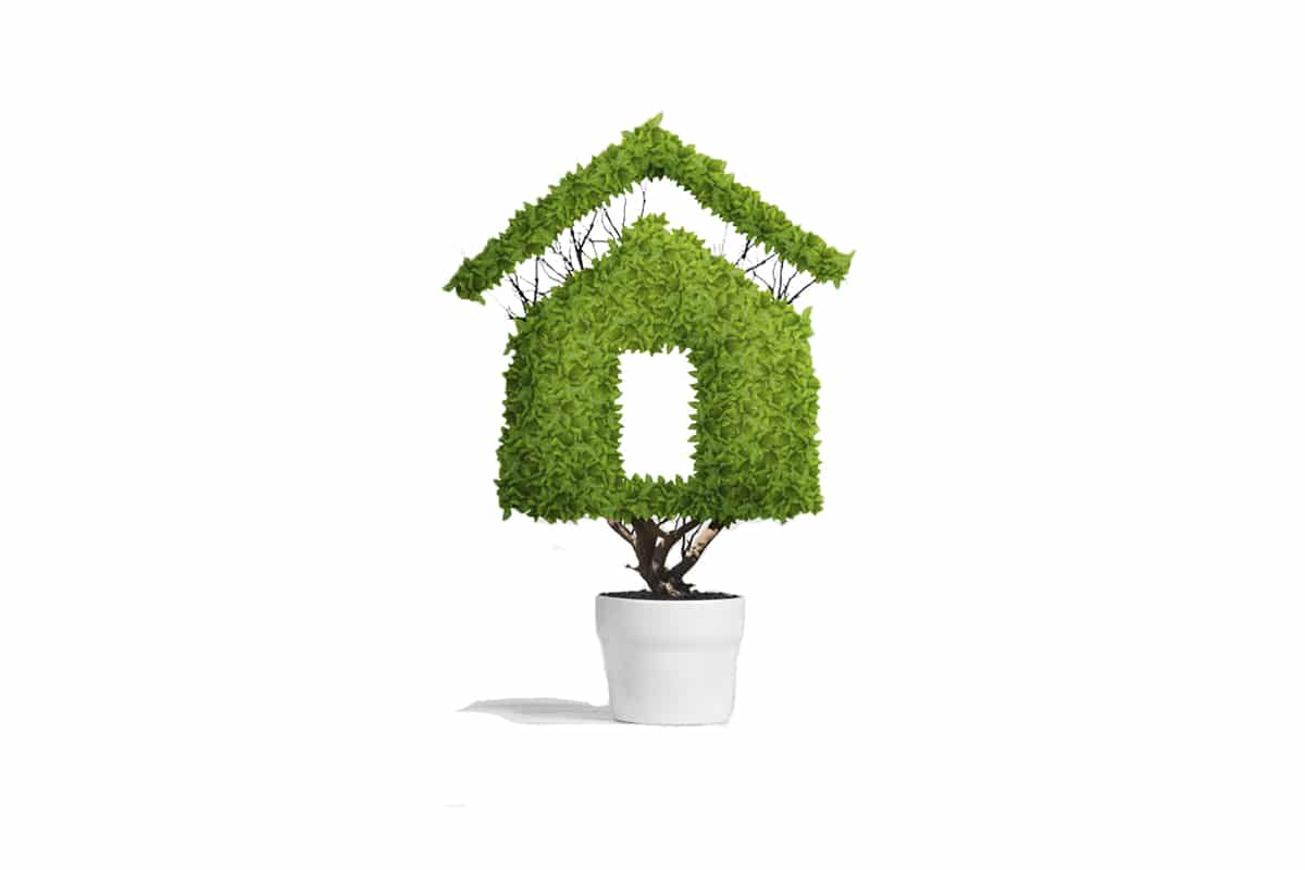 Green Tree shaped like a home in white pot