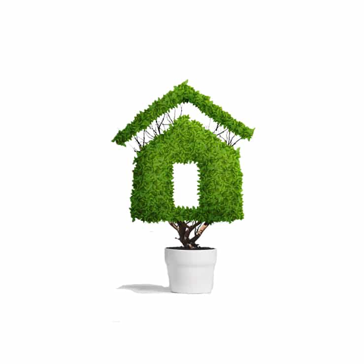 green house shaped plant in white pot